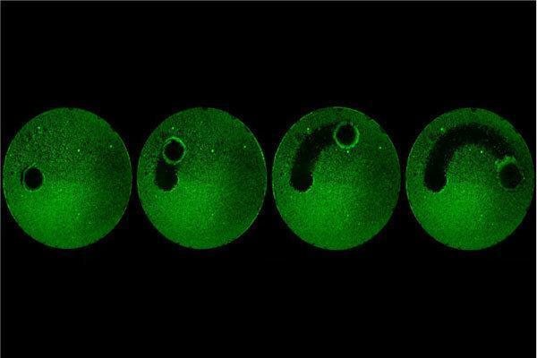 میکرورباتی که قرار است دندان هایمان را تمیز کند