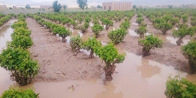 مخاطرات طبیعی سالانه 1000 میلیارد تومان به بخش کشاورزی آذربایجان غربی خسارت می زند