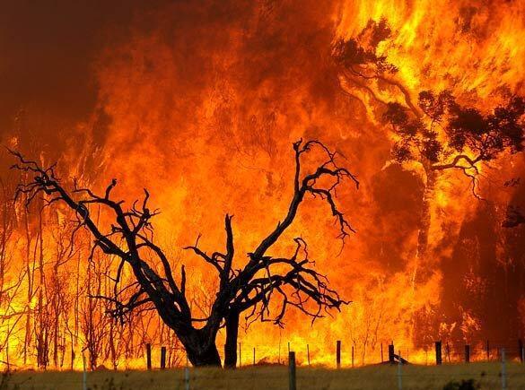 هشدار سازمان جنگل ها ، افزایش خطر آتش سوزی در جنگل های شمال کشور