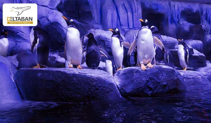 معرفی شش باغ وحش جذاب در استانبول