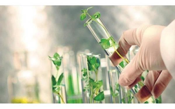رشد قابل توجه در حوزه کمیت ارقام جدید گیاهی
