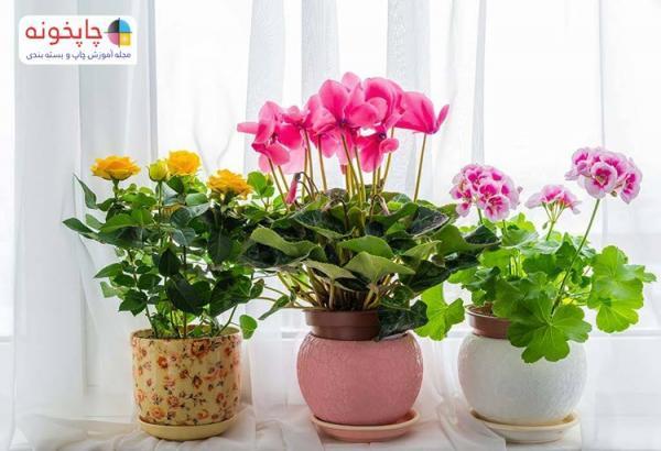 بهترین گل آپارتمانی برای خرید کدام است ؟