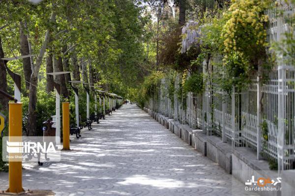 باغ ارم شیراز با رُزها و سرونازهای جهانی، عکس