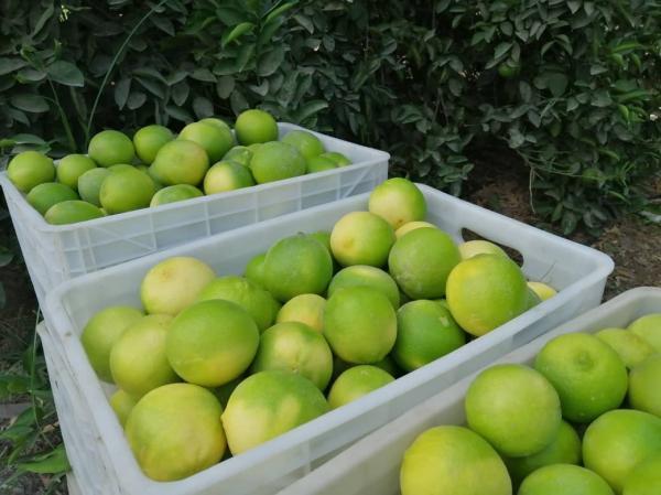 طراحی خانه های ویلایی: برداشت لیمو شیرین از باغ های توکهور وهشتبندی